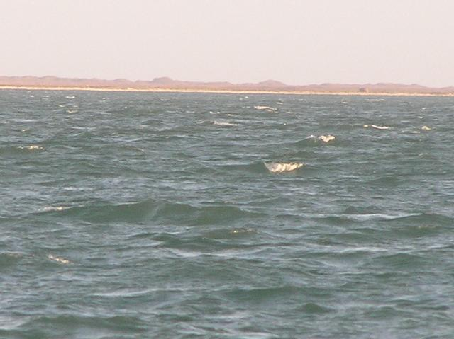 View to the east from the confluence, showing the barrier island that separates Aransas Bay from the Gulf of Mexico.