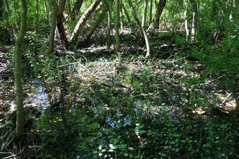 #1: It is in a swamp.  Looks like mosquito breeding grounds.