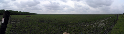 #1: Panorama showing the field with the confluence