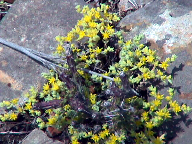 Yellow flowers at site