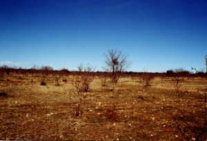 #1: Typical view across the pasture