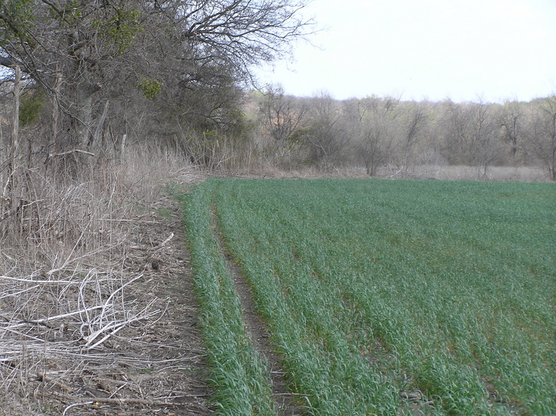 Alfalfa field edge, approaching the confluence from the west, looking east-northeast with about 200 meters to go.
