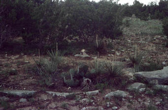 #1: Cairn at the spot; cactus and yucca in foreground
