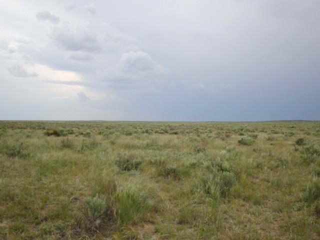 Looking west:  yucca plants, sagebrush, and an approaching storm