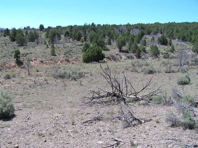 View to the south's pinon-juniper forest from the confluence.