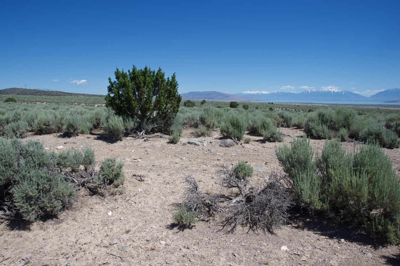 The confluence point lies in a sandy patch of desert, with little growing except sagebrush.  (This is also a view to the North, towards Utah Lake and the Wasatch Range.)