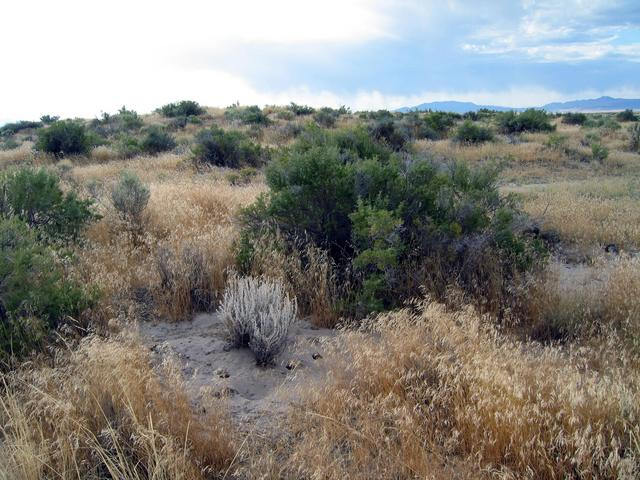 General area and rodent home