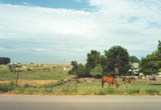 #1: Horses grazing in a field.