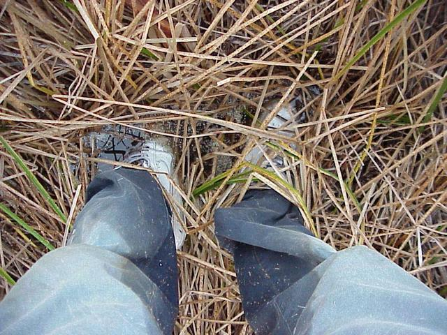 Wet trousers and marsh vegetation.