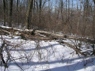 #1: 39N 78W lies just on the other side of this fallen tree.