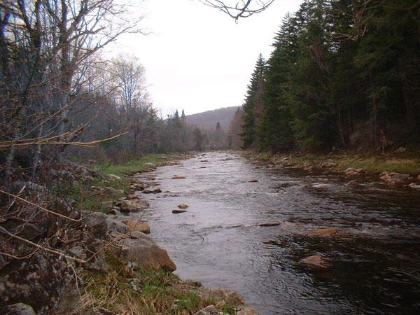 A river running along side the National Forest road.