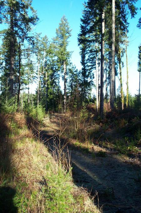 Logging road to the confluence