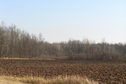 #3: View from the north, looking toward the marsh to the southeast where the confluence lies.