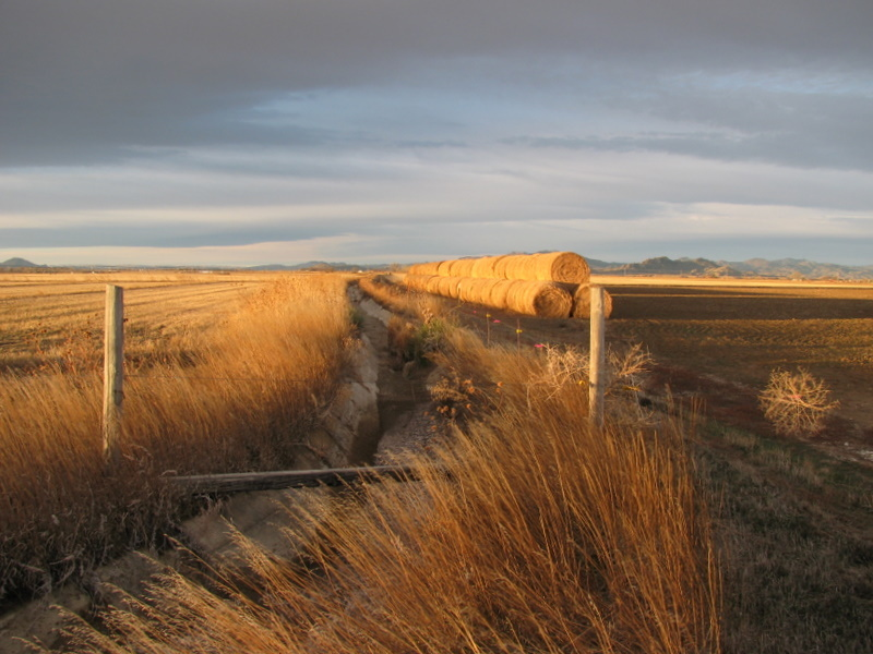 Looking West at irrigation ditch at the corner of Reservoir Road and Ayers Road.  Note tumbleweed on the right.