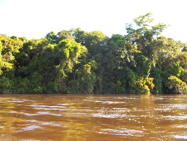 VIEW TO SOUTH, THE CONFLUENCE IS 33 MTS INSIDE THE AMAZON JUNGLE IN THE YACAPANA NATIONAL PARK