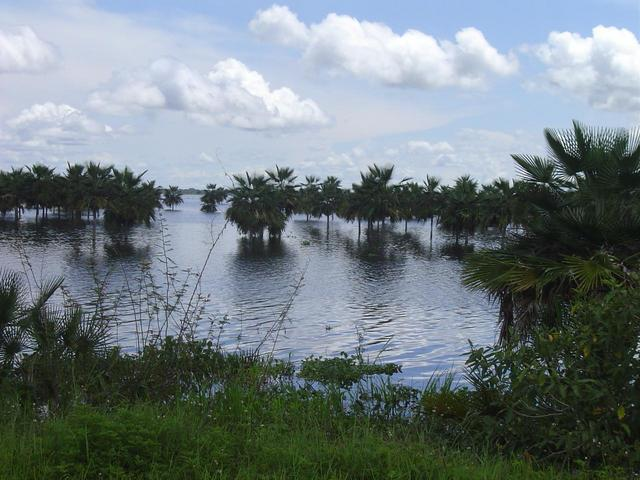 ESTUARY OR SWAMP OF CAMAGUAN- TYPICAL FLOODED LAND