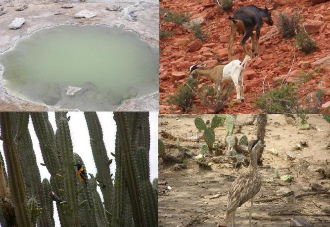 THE THERMAL WATER HOLE/ THE GOAT/ TURPIAL NATIONAL BIRD/ AND TYPICAL LAND BIRDS