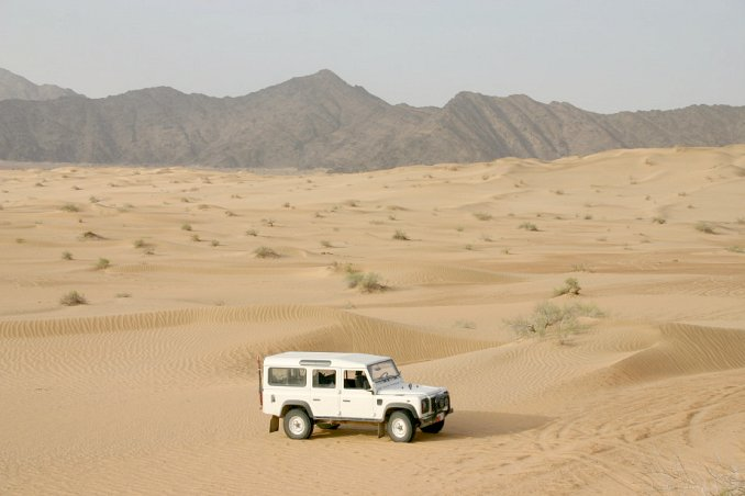 Landy in the dunes