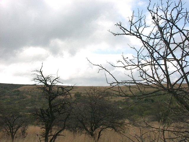 View North