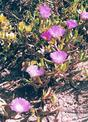#8: Wild flowers at confluence point