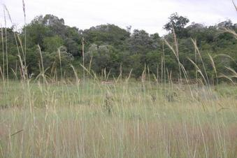 #1: View of Confluence area through tall grass