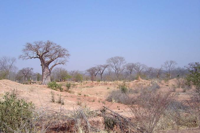 View near our stop with baobab tree and termite mound